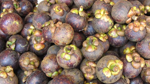 Purple mangosteen (Garcinia mangostana)